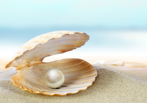 ... here: Home / Biotech / The Oyster, the Grain of Sand, and the Pearl Open Oyster Shell With Pearl